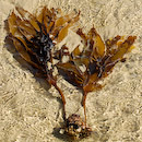 Sea Weed - Copyright © 2008 - Mark Atkins Photographer
